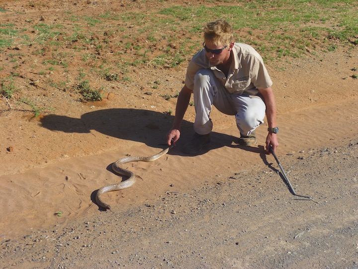Ranger appassionato di insetti e di rettili, ci mostra un cobra.